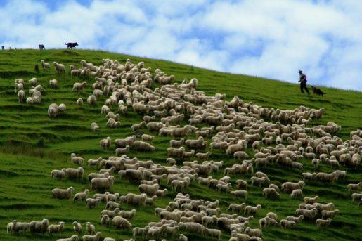 أكبر الصناعات التى تشكل اقتصاد نيوزيلندا - مدونة كاڨيو